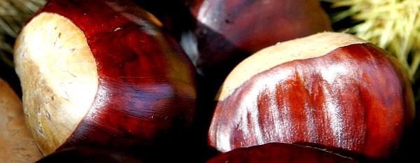 Плоды конского каштана 2