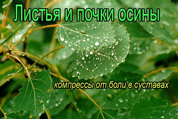 Осиновые листья для суставов