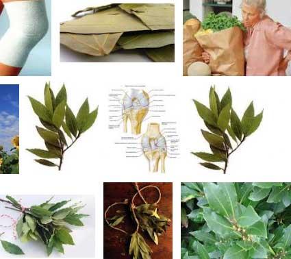 Суставы лечим лавровым листом
