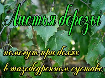 Березовые листья при болях в тазобедренном